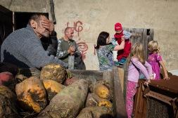 Broniszow, 12.10.2014. Zbior burakow cukrowych. Fot. Joanna Mrowka / FORUM